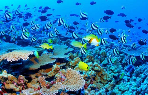 (The-Great-Barrier-Reef)大堡礁